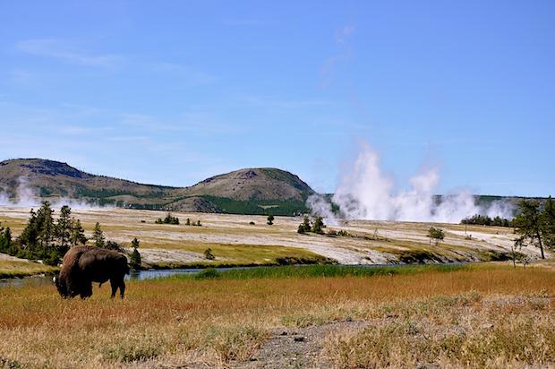 article celebrating centennial national park tours